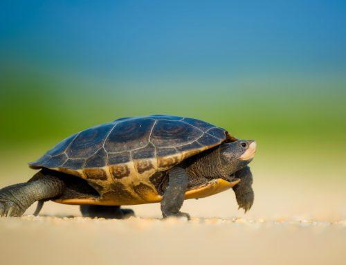 Schildkröte verbessert Geschäftsprozesse